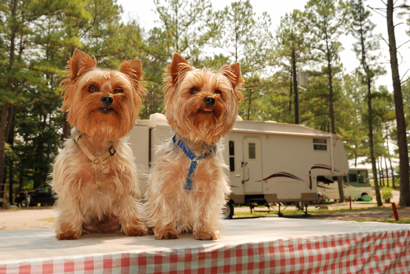 National Dog Day – The Dos and Don'ts of Camping with Pets