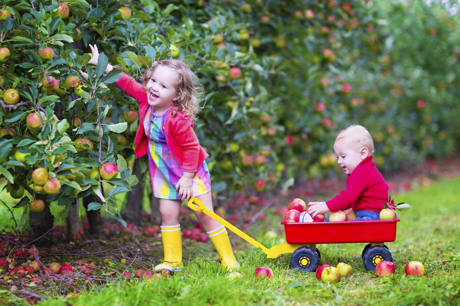 Get your Fall On: Best Places for Apple Picking