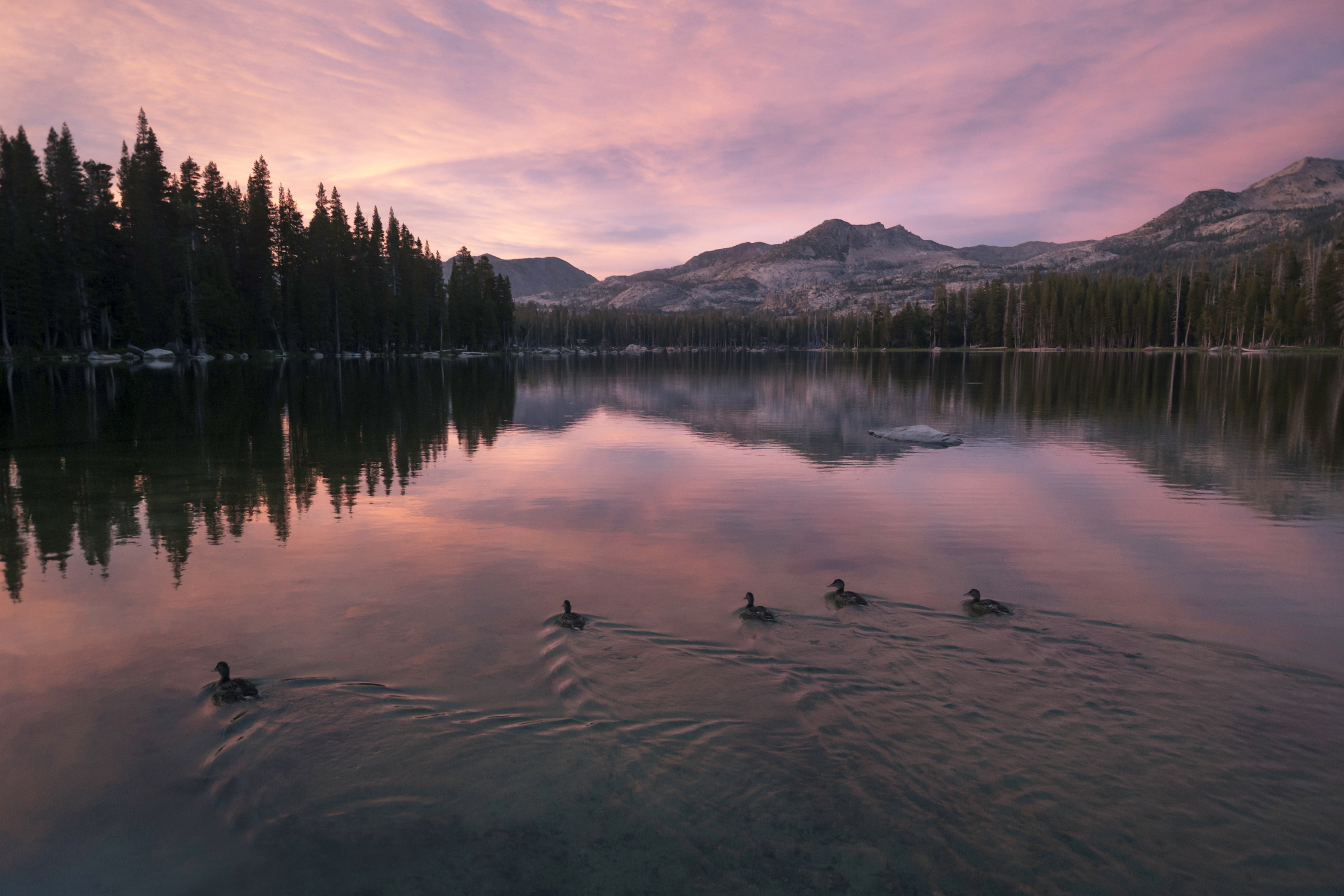 8 Best National Forests for Summer RV Travel