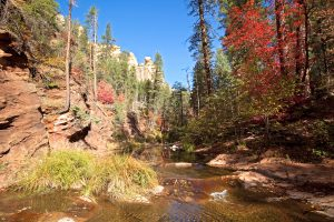 Travel Tuesday Spotlight: Coconino National Forest