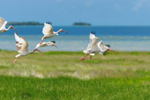 Travel Tuesday: Best Birding Spots In The U.S.