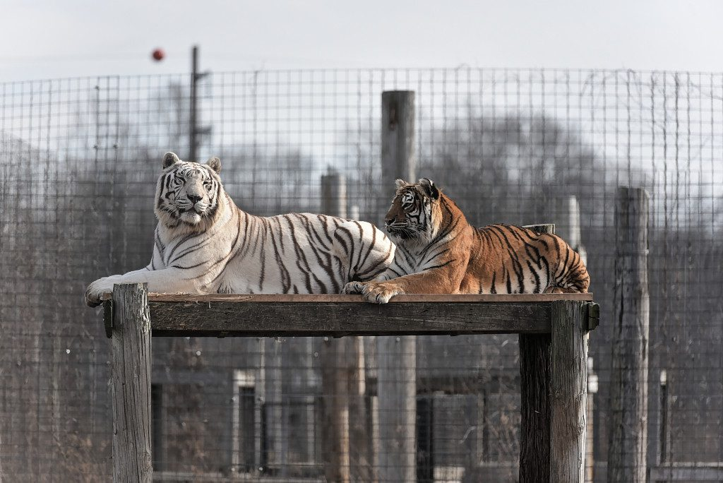 Exotic Feline Rescue Center