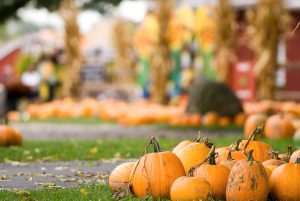 Bucket List Worthy Fall Festivals from Across The USA