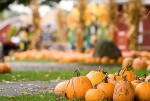 Bucket List Worthy Fall Festivals from Across The USA