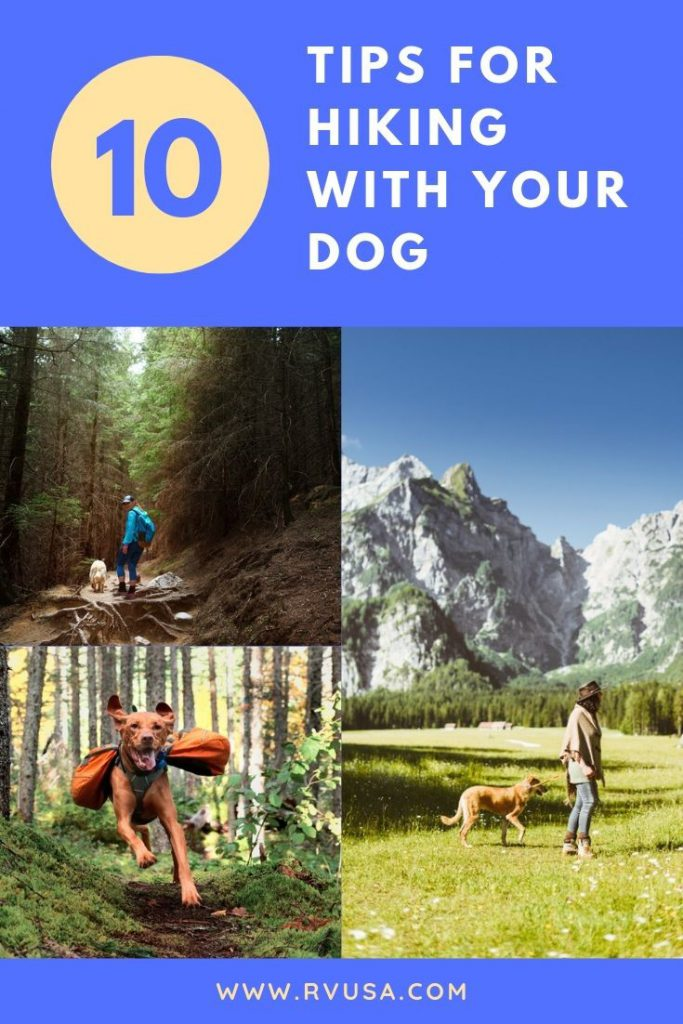 Going hiking with your dog can be considered a fantastic adventure because it has its thrills and fun. This article provides you with tips on how to safely enjoy your hike with your furry friend, so we hope you'll learn a great deal of the do's and don'ts.
