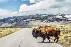 Beautiful Landmarks in Montana