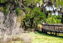 best hiking trails in florida