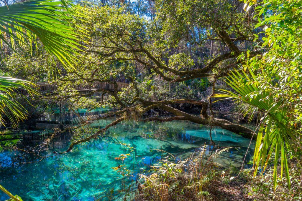 Juniper Springs Recreation Area Florida RV Parks