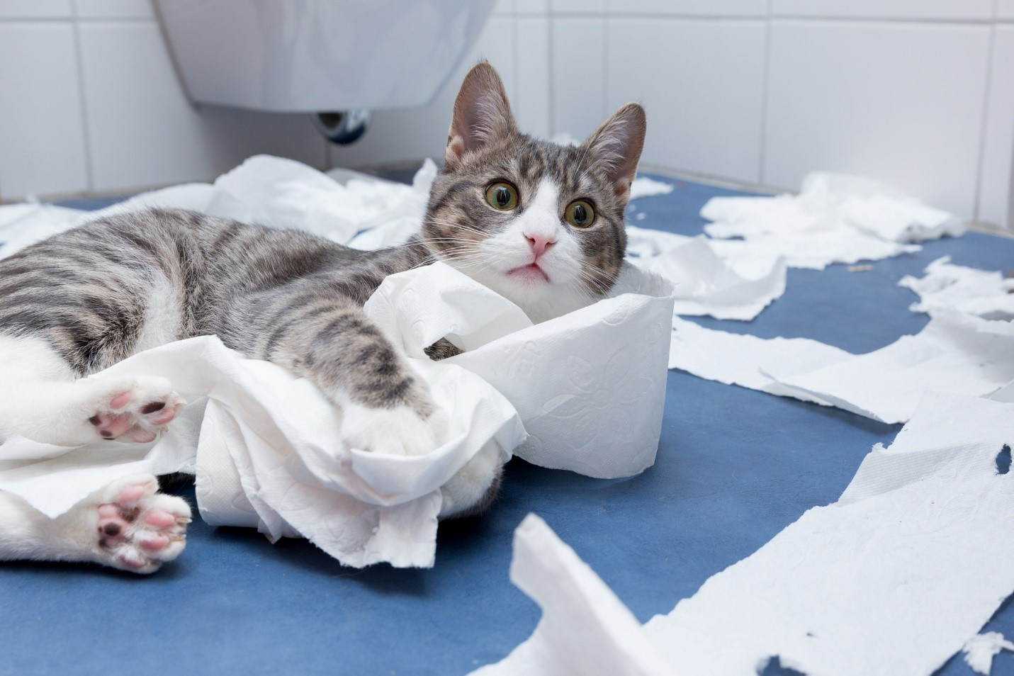 RV toilet paper - cat ruining rolls of toilet paper