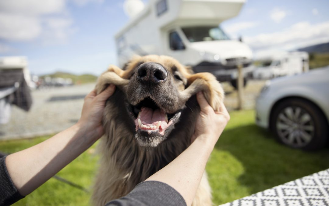 7 Best Dog Friendly RV Parks in the US