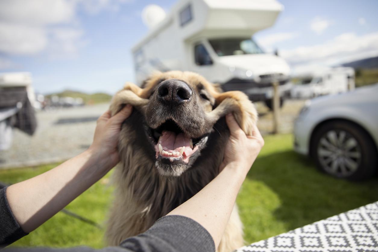 Dog smiles at a dog friendly RV park